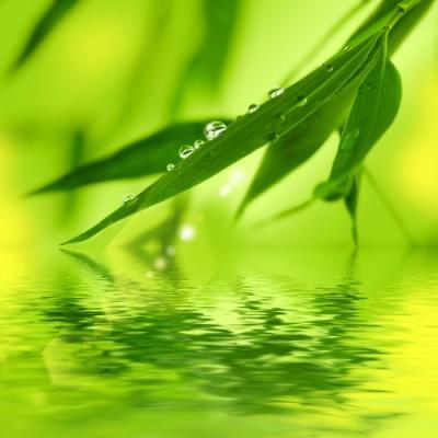 Йога растений три доши и растения