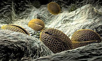 Аллергия - лечение аллергии - НАРМЕД